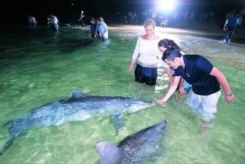 イルカは日が暮れる頃リゾートへやってきます
