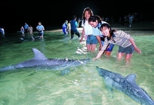 こんなに間近でイルカ餌付け体験ができます