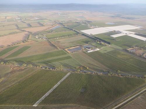 上空からご覧頂ける一面のぶどう畑