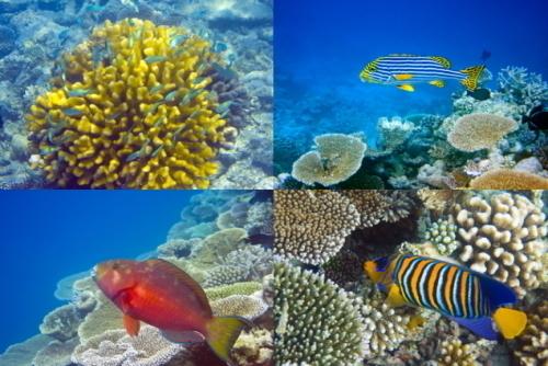 色とりどりの熱帯魚、サンゴが待っています