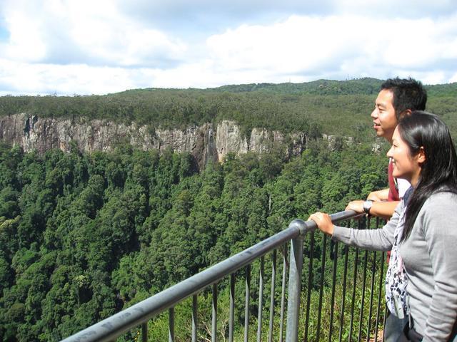 世界自然遺産の森を見下ろすキャニオンルックアウト!