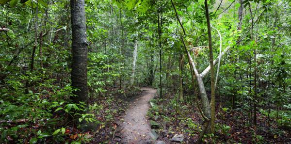 熱帯雨林の中を散策することもできます