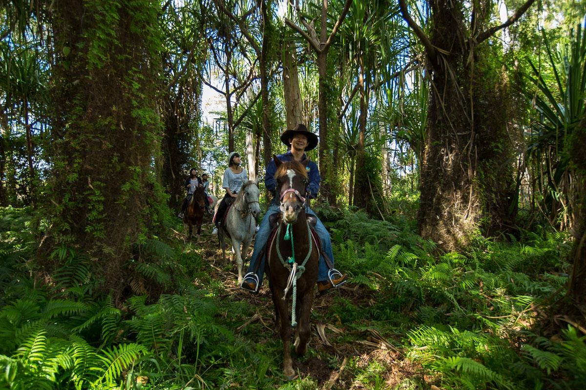 ジャングルの中を進む馬たち