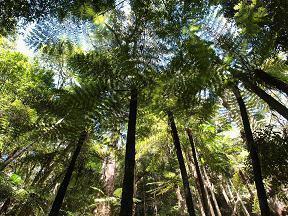 熱帯雨林のジャングルです!