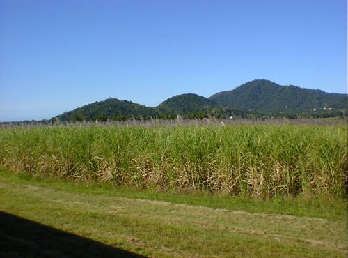 キュランダ鉄道車窓からの風景