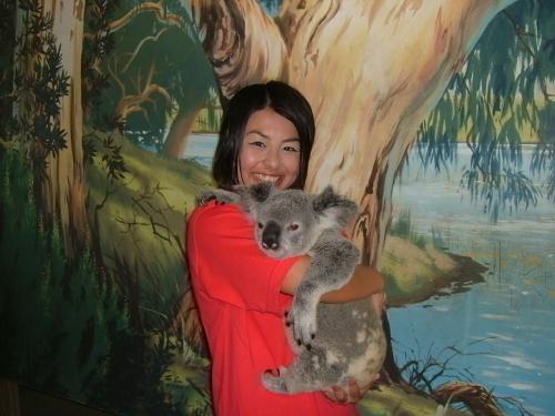ツアーのハイライト コアラ抱っこ写真(写真付きコースのみ)