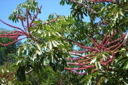 熱帯特有の植物