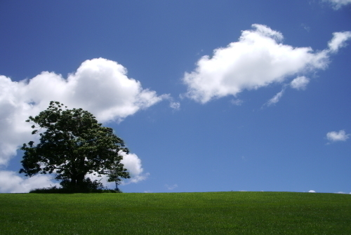 澄み切った空気のアサートン高原