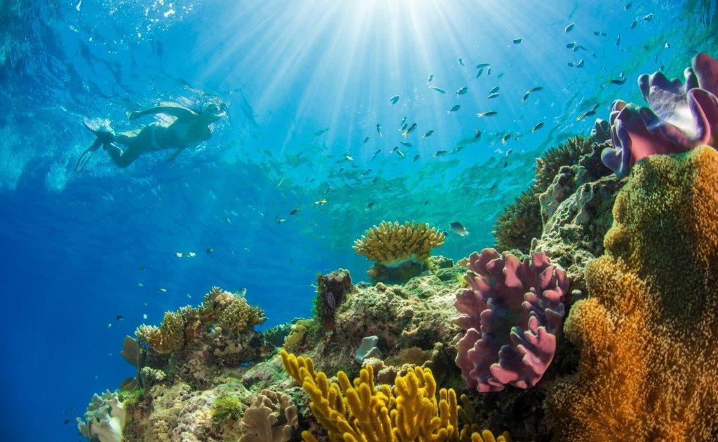 ボーダーアイランドでのシュノーケルでは一面に広がる珊瑚礁が見れます