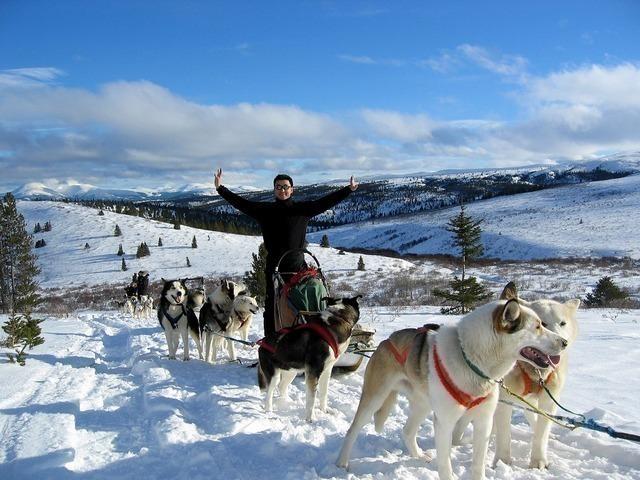 大自然を駆け抜ける犬ゾリ(オプショナルツアー)