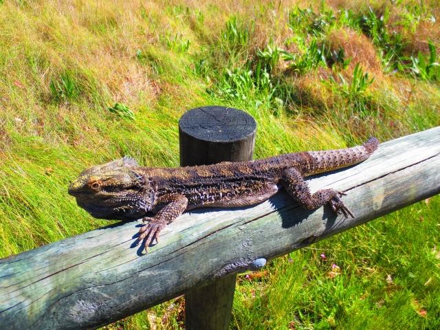ツアーの途中にはこんな野生動物が見つかるかも?!