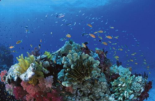 たくさんの魚やさんご礁に会えるでしょう