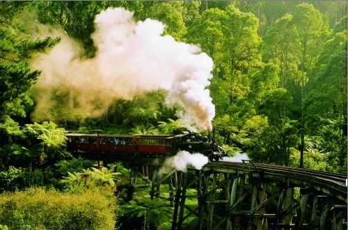 緑生い茂る森を走り抜けるSL列車のパッフィンビリー