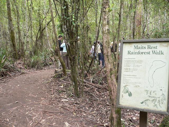 オタウェイ温帯雨林へ