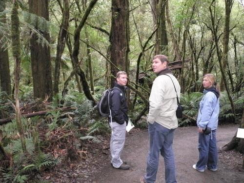 森林を散策