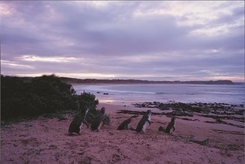 黄昏とペンギンたち