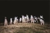 ペンギンは目が弱いので、残念ながらペンギン・パレード会場での撮影は禁止されています。しっかりみなさんの目にかわいらしいペンギンの姿を収めてください。