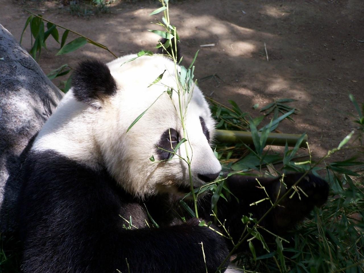 サンディエゴ動物園