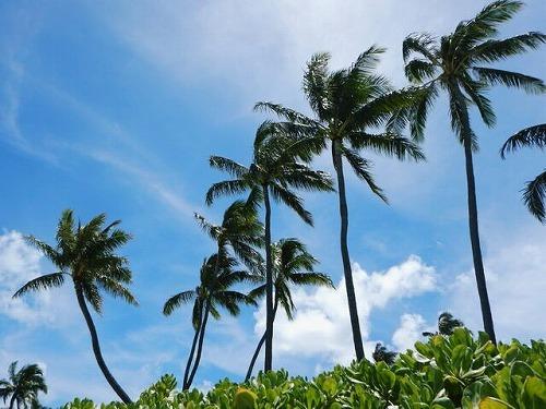 ハワイを満喫