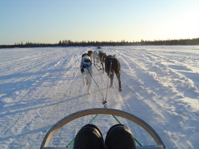 見た目より迫力ある犬ぞり!!一面の白銀の雪原は圧巻です☆