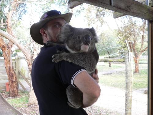 スタッフがコアラを連れてきてくれました
