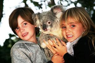 お子様のコアラ抱っこ写真はこのような形になります(飼育員がコアラを支えております)