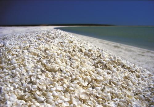 白さがまぶしいシェルビーチ