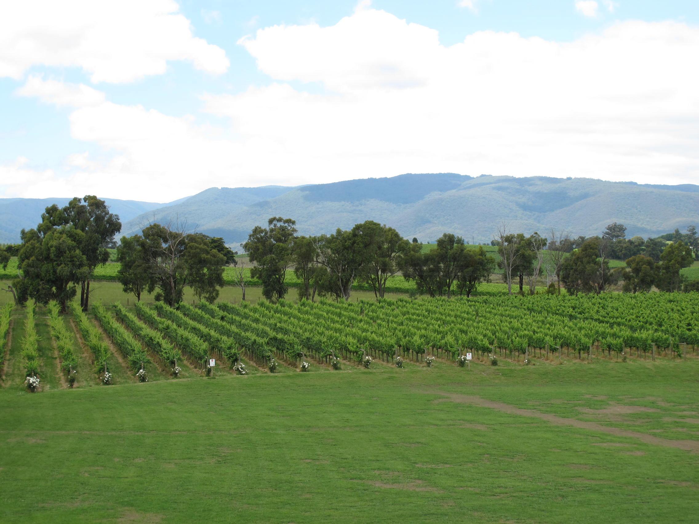 一面にブドウ畑が広がるヤラバレー