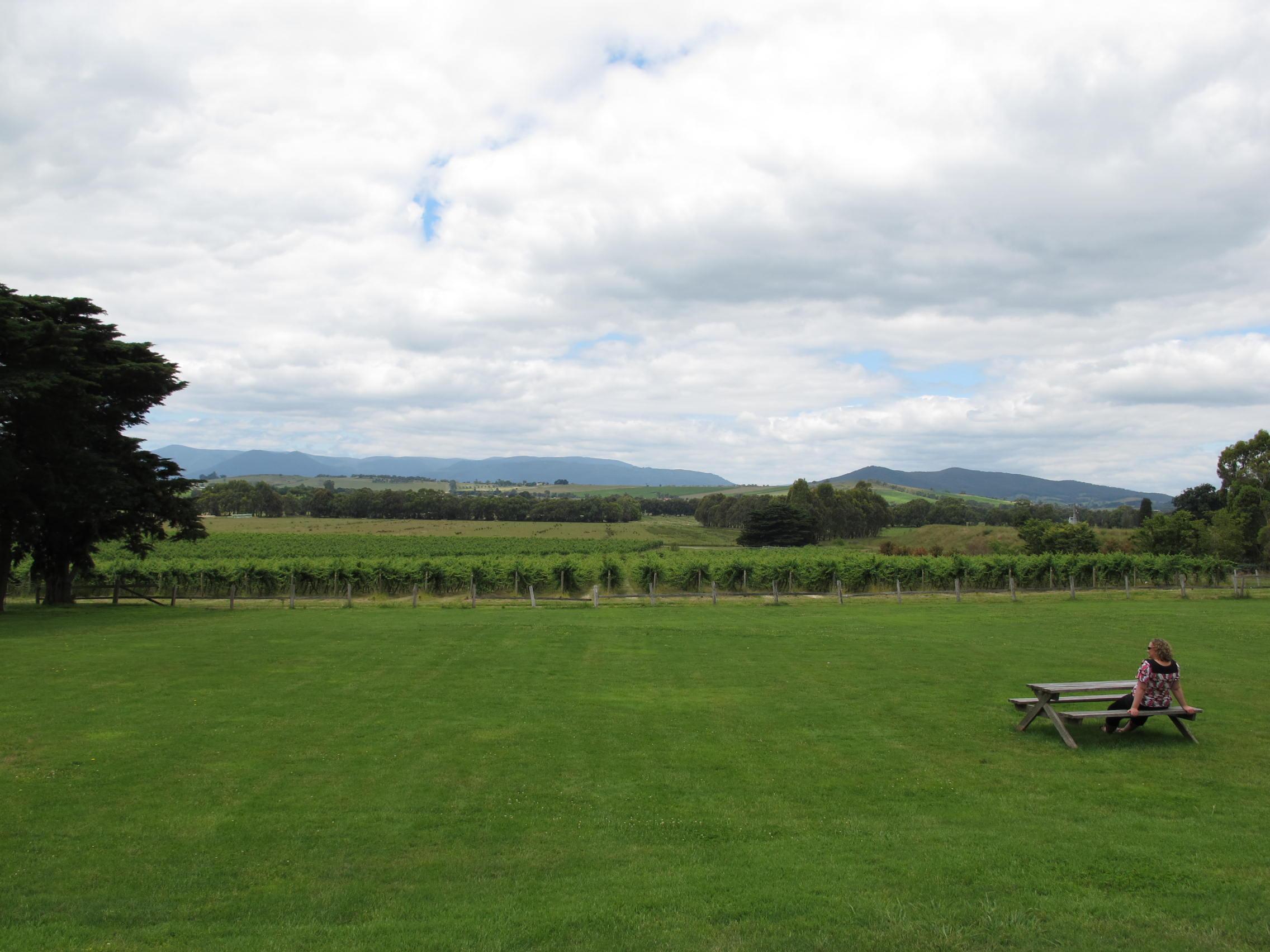 ここから見渡せる景色も一面ブドウ畑です