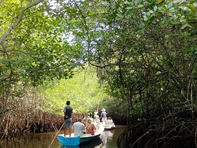 手ごきボートでのマングローブ林ツアー