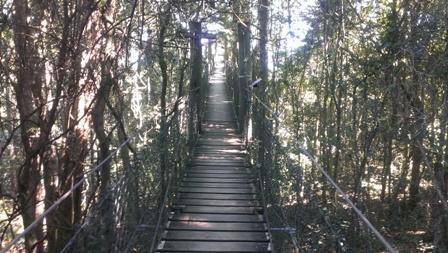 ツリートップウォーク・吊り橋を歩きます。
