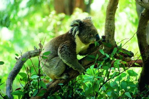 カバシャム動物公園にも行きます