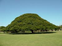 人気のこの木なんの木を見に行く