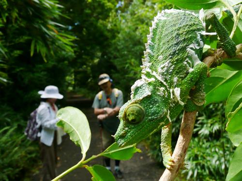 ジャングル・ハイキングツアー [トラベルドンキー] オアフ島