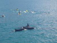 野生のイルカと泳ぎます