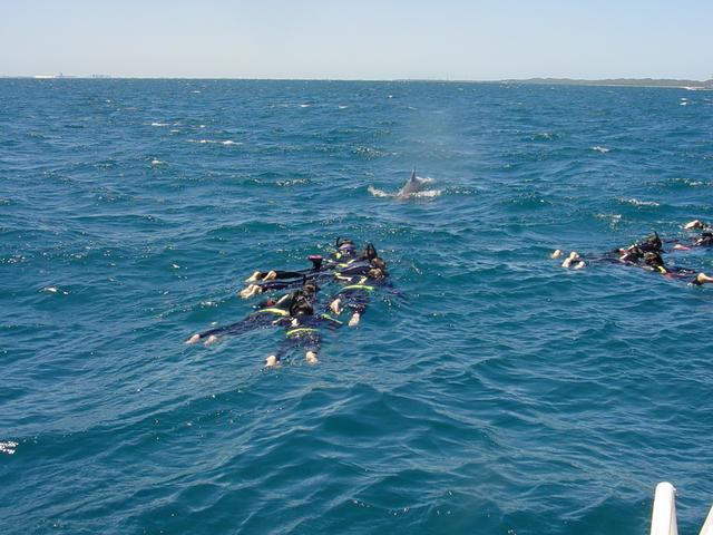みんなで泳ぐと更に楽しい!