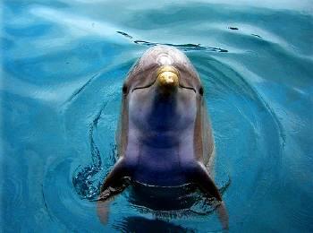 可愛いイルカがコンニチワ!