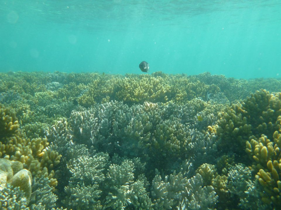 どこまでも広がる珊瑚礁