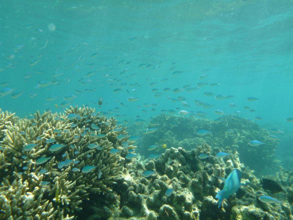 青く透明な水の世界です
