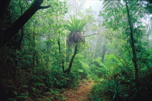 美しい亜熱帯の森林