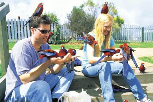 野鳥の餌付け体験