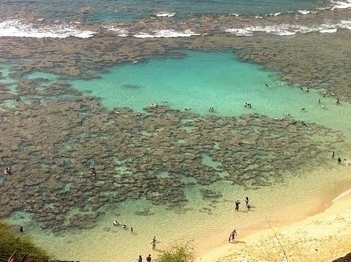 目の前に広がるサンゴ礁