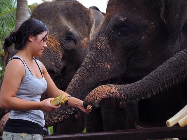 ゾウへのエサやり体験
