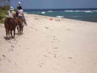浜辺を行きます