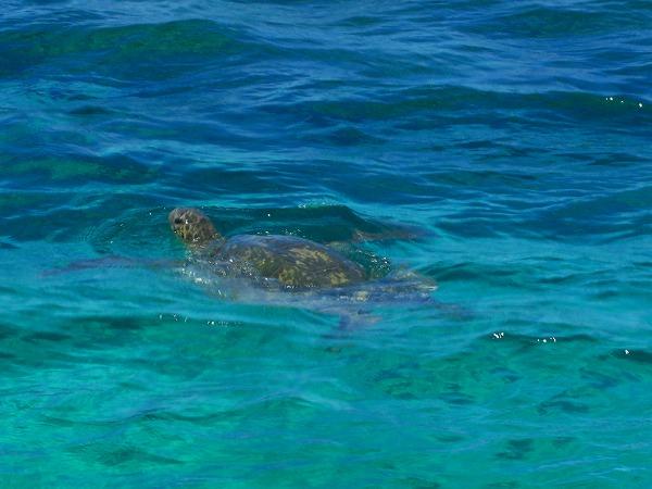 海亀の楽園へ!