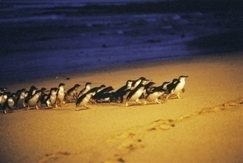 来た!ペンギンが!