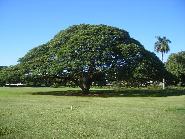 この木なんの木、日立の木