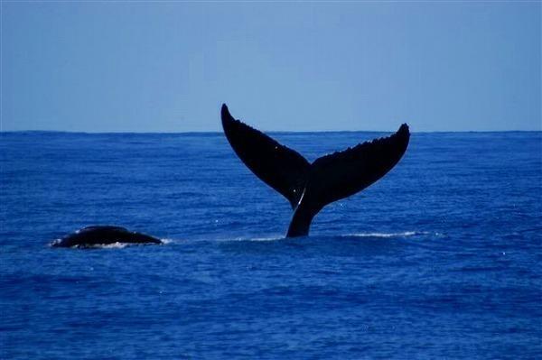 クジラも!(冬季:12-3月)