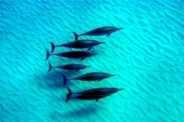美しい海&野生のイルカ