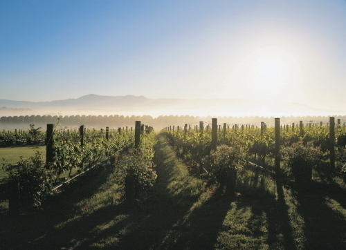 ヤラバレーのワイン畑